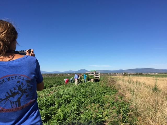 herb farms