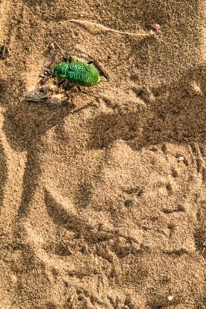 Жучок на песке