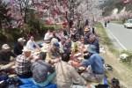犀沢公園橋通りを愛する会の花見会