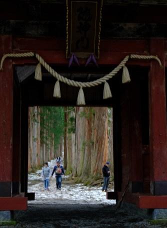 随神門から樹齢400年の杉並木