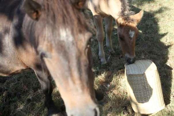 chevaux clip pole emploi campagne