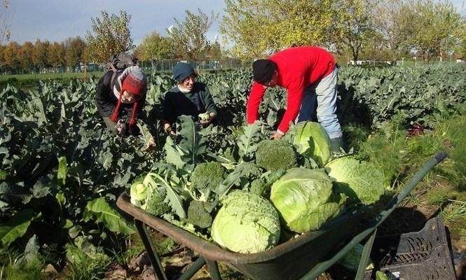 Arvaia organizza la festa dei cittadini-contadini!