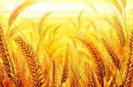Greenpeace: «Per evitare altre pandemie stop ai sussidi per l'agricoltura intensiva, sostegno per agricoltura su piccola scala»