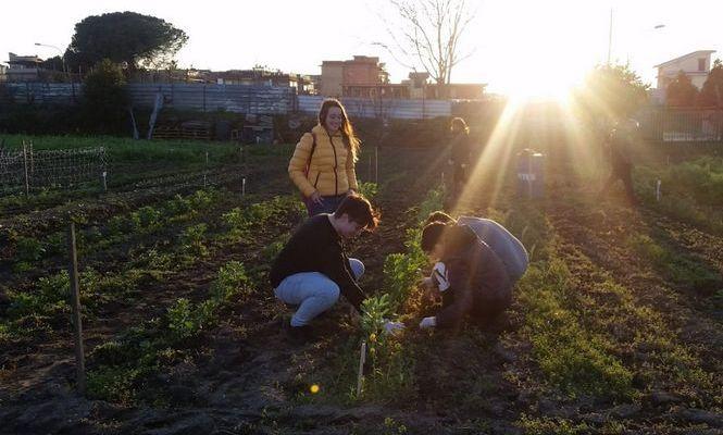 Orto Condiviso Vesuviano, dove si crea comunità e si recuperano antiche colture