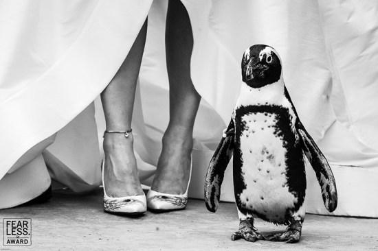 Mejores fotos de boda 2018, Fearless Awards.
