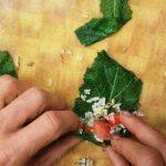 סיורי ליקוט - עלי תות ממולאים