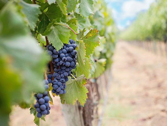 winery-israel-culinary-tours