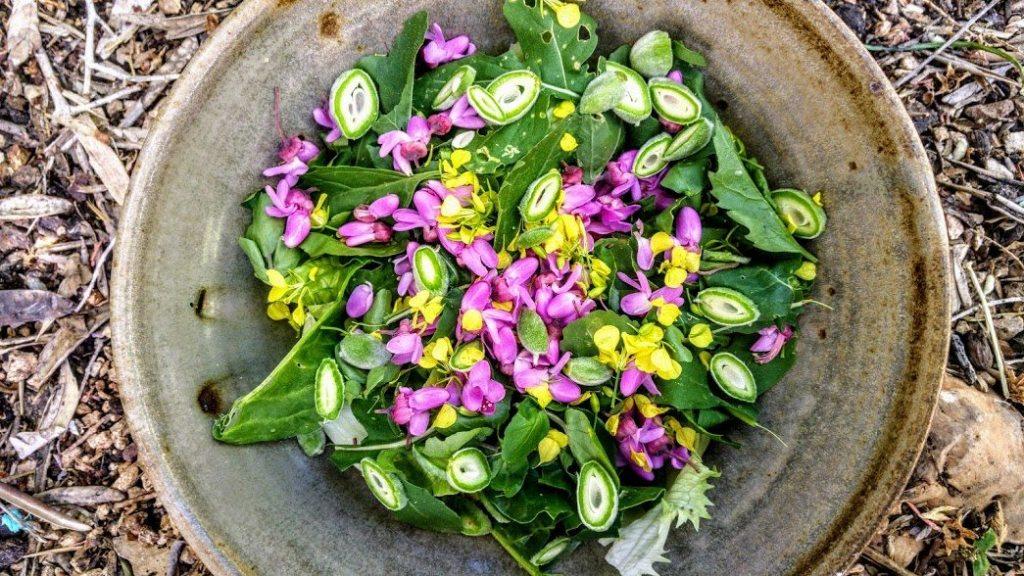 סלט ליקוטים פרחי חרדל וכליל החורש, שקדים ירוקים
