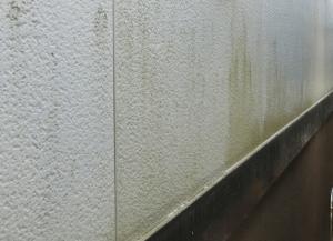 外壁の汚れ・コケ・カビ