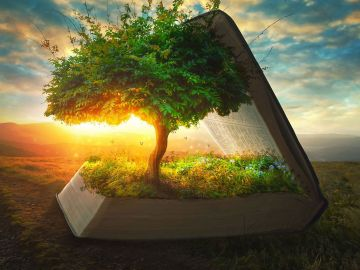 Tree, light, sun, 10-great-tools-for-your-spiritual-growth-mega