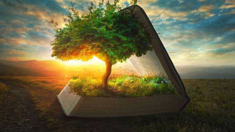 Tree, light, sun, 10-great-tools-for-your-spiritual-growth-mega