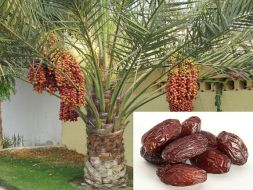 Date and Date tree