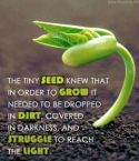 Seed knew to grow, must drop in dirt, darkness
