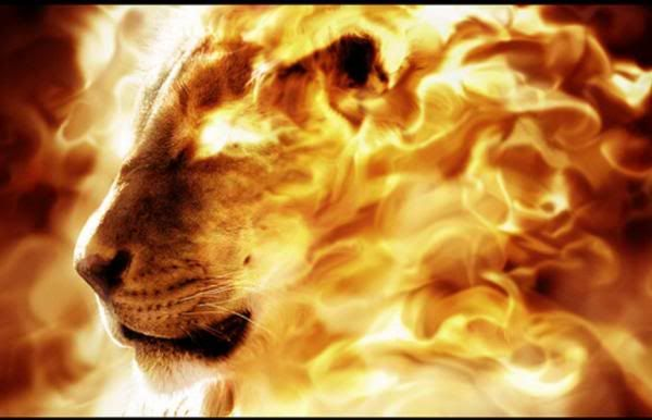lion of the Divine – Fire