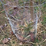 evergreen seedling deer protection cage pic 01