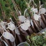 Emily's evergreen seedling wedding gift ideas