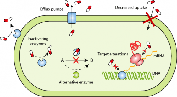 metabolic pathways of the bacterium Resistance mechanisms