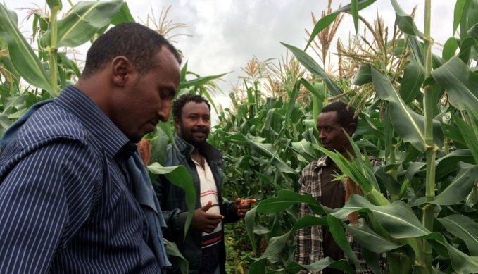 Ethiopia Ag August