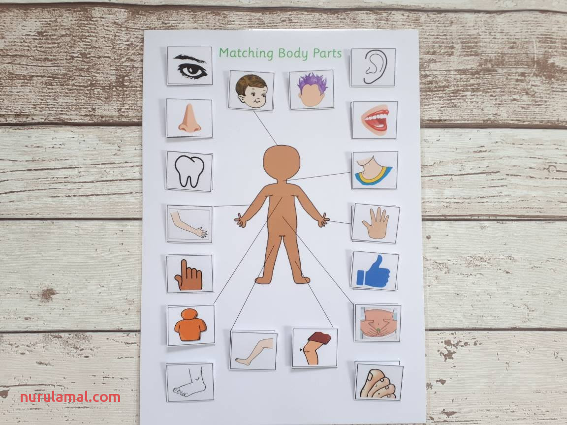 Preschool Worksheets Body Parts Free Printable Kids