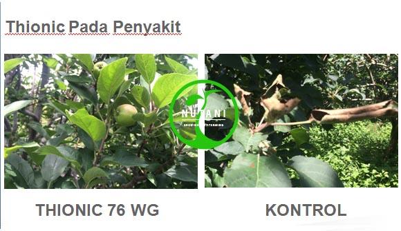 thionic76wg_penyakut