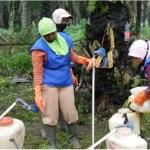 Mengapa Pakaian Pelindung Diri (Apron) Penting pada saat Aplikasi Pestisida ?