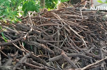 Biochar pembenah tanah