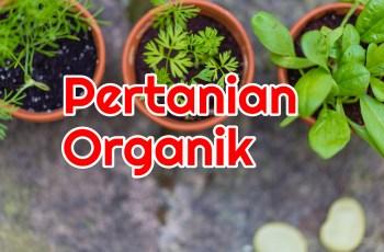 Apa itu Pertanian Organik?