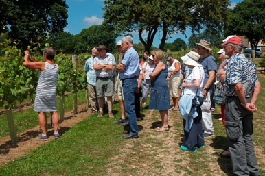 Vineyard Tours summer