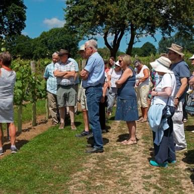 Vineyard Tours summer