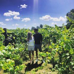 Vineyard Voucher Day Tour
