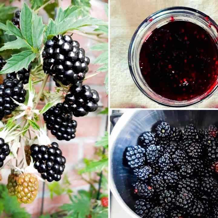 Blackberry jam and a blackberry plant