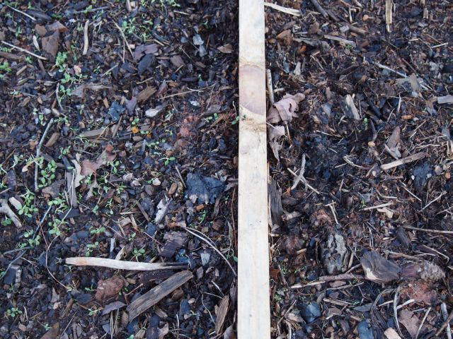 the crimson clover is on the left of the divider and the barely surviving ladino clover is on the right