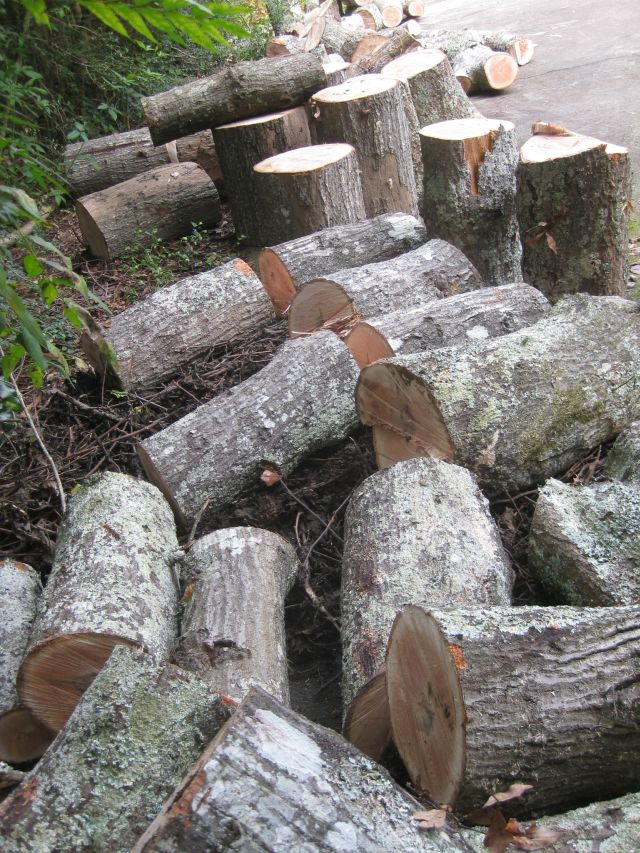 firewood enough for several winters