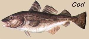 cod-bacalhau