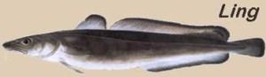 ling-bacalhau