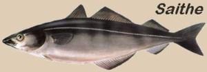 saithe-bacalhau