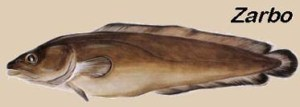 tusk-bacalhau