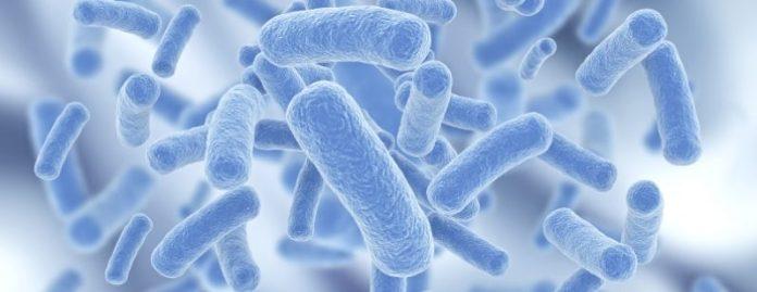 paraprobióticos