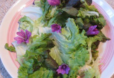 salade fleurs mauve