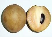 sapodilla with seed