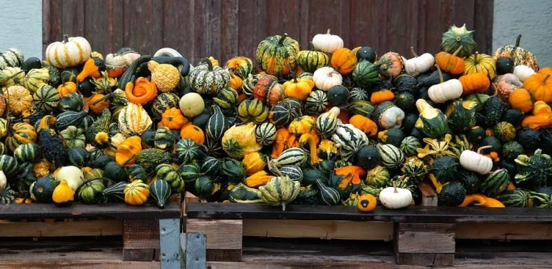 PumpkinsSquashes