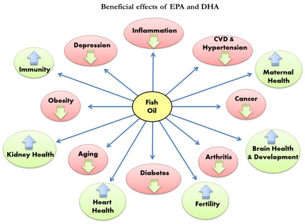 Image result for benefits of dha