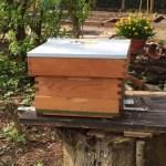 bijenkast1