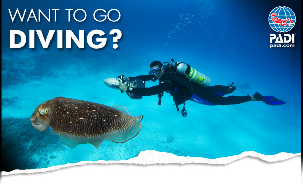 discover scuba diving in essex