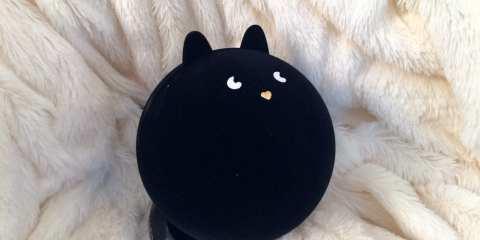 Pupa Cat