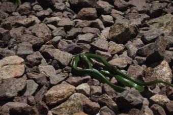 Machu Pichu Arkeolojik kente çıkarken bir yaralı can
