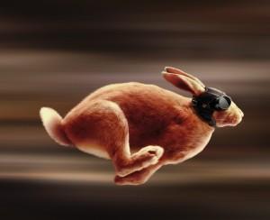 Скоростной заяц