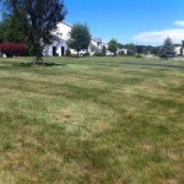 NVS-Landscaping-Lawn-Mowing-05