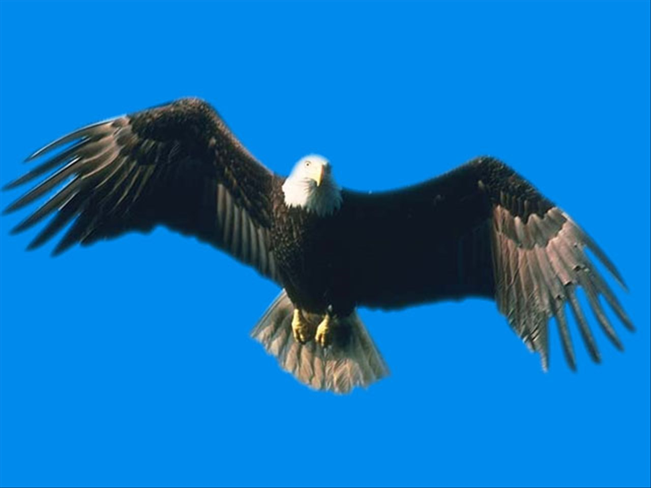 Eagle Watch Cruises Eagles