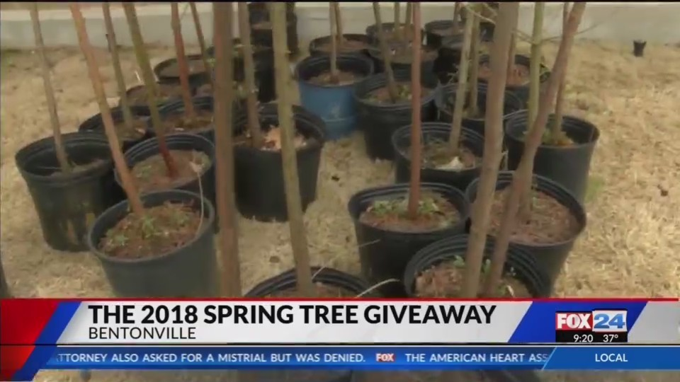 Spring Tree Giveaway (fox 24)
